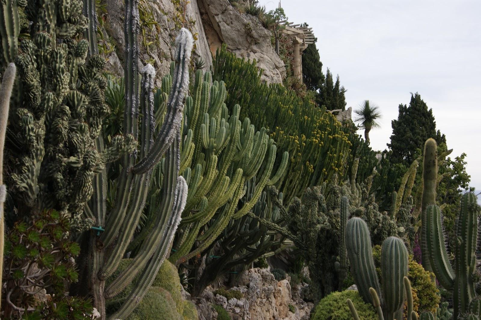 Succulent sundae monaco jardin exotique part 4 for Jardin exotique