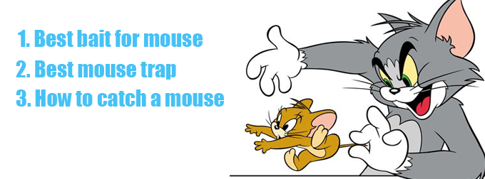 best bait for mouse trap how to catch a mouse. Black Bedroom Furniture Sets. Home Design Ideas