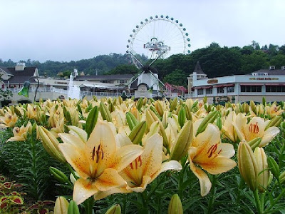 Hình ảnh đẹp của hoa Bách hợp