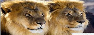 Couverture Facebook Timeline du le Roi Lion