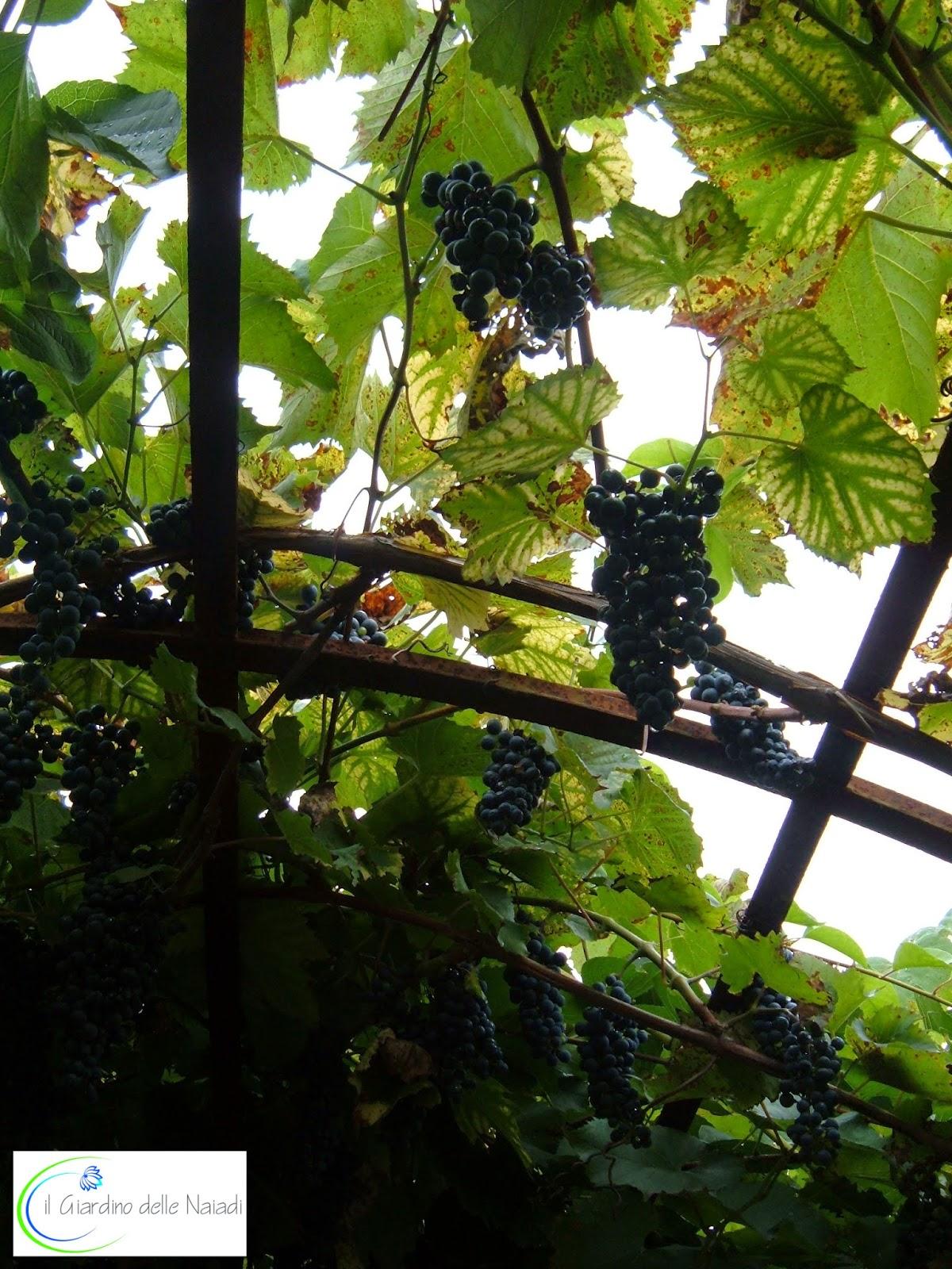 Il giardino delle naiadi: febbraio 2015