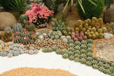 diseo creativo jardin cactus