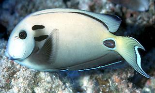 ikan karang cinta laut