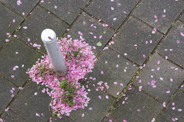 pink petals around a white post
