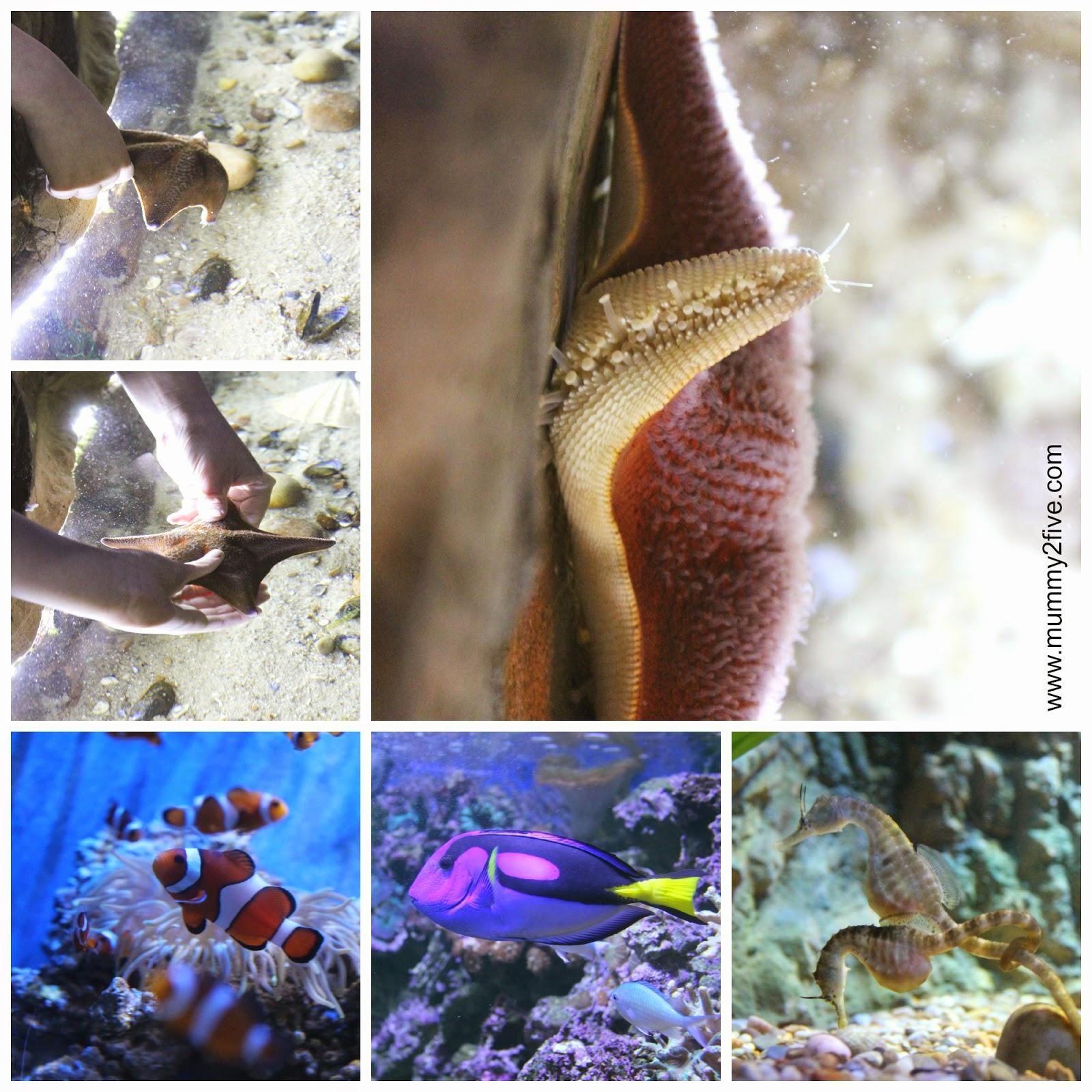 starfish, clownfish, regal tangs and seahorses