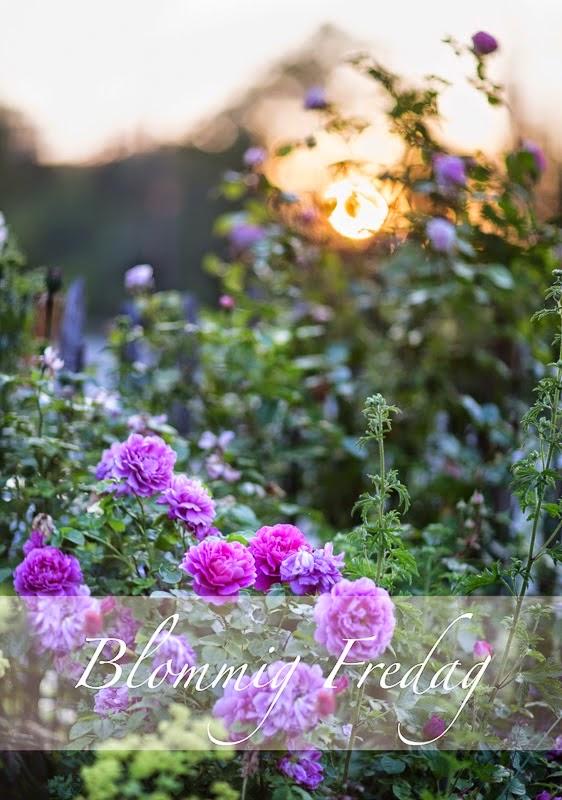 http://blandrosorochbladloss.blogspot.se/2014/09/sommarplaga.html