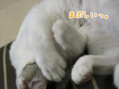 まぶしそうに寝る猫