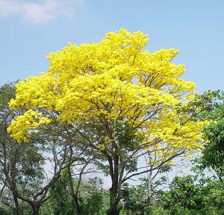 Símbolos Naturales de Venezuela | Amiguito En Línea