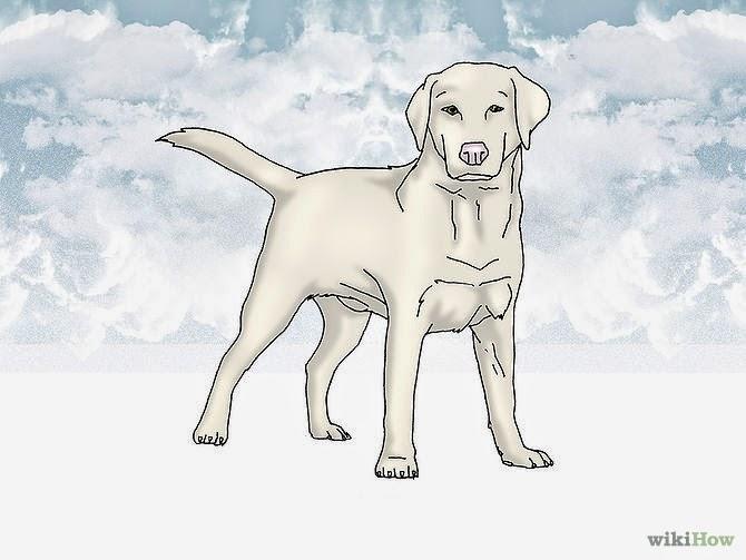 Como se comunicar com seu cão