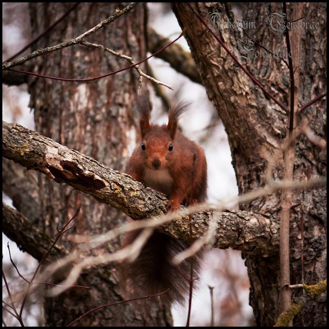 Das Eichhörnchen - Tierfotografie am Max Eyth See