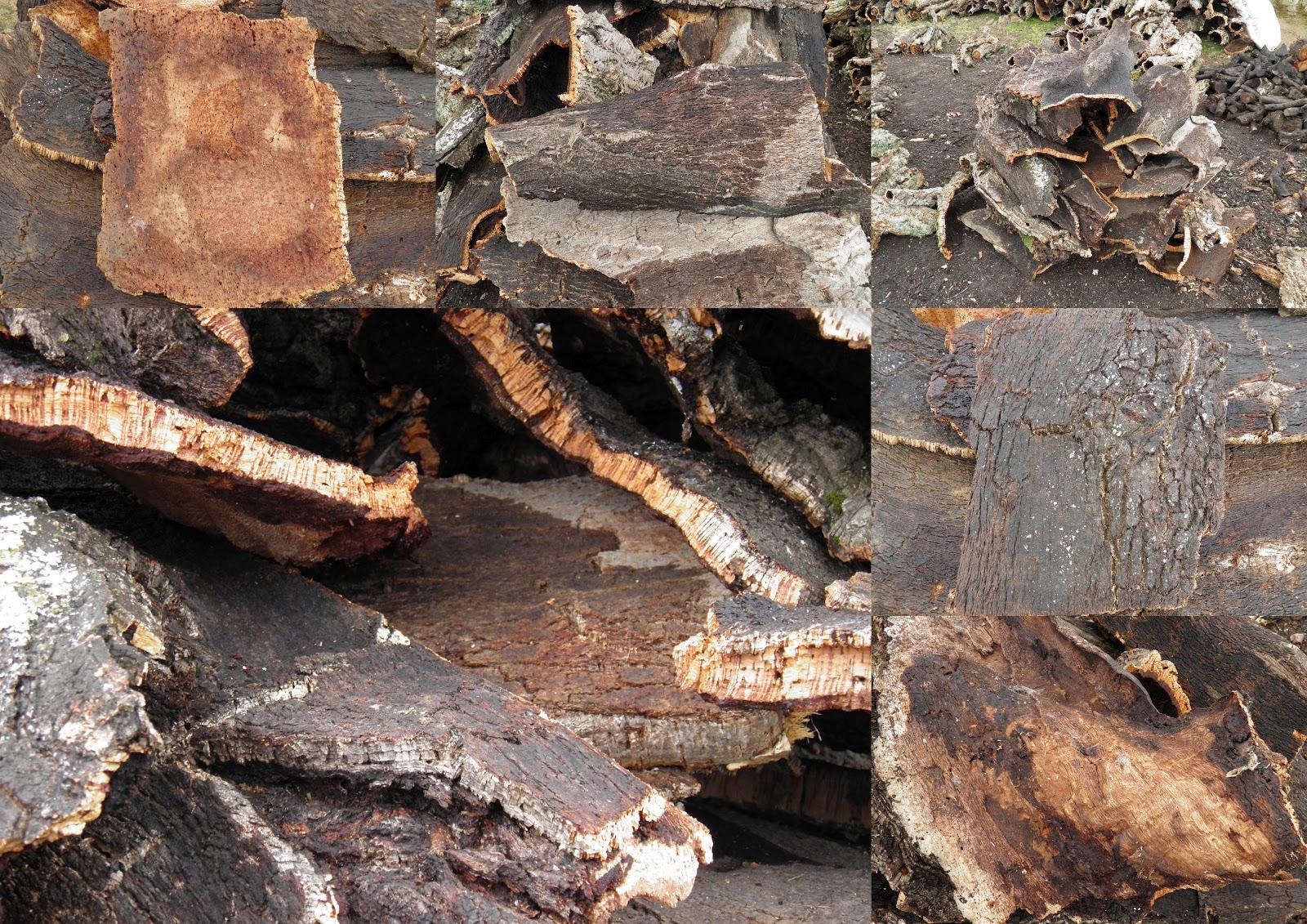 Terrario natural planchas de corcho - Planchas de corcho ...