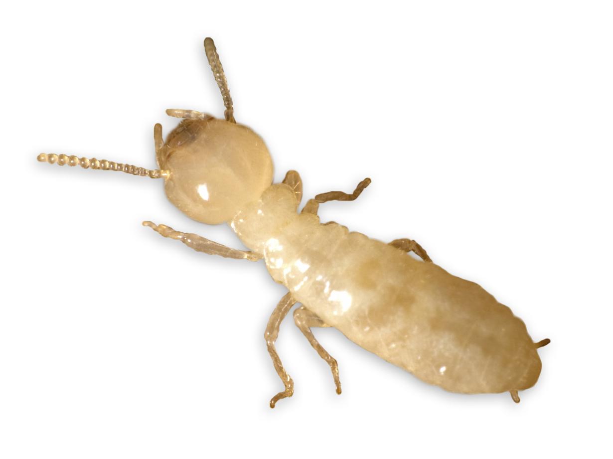 Aprende a evitar controlar y eliminar plagas en tu hogar for Como eliminar plaga de hormigas