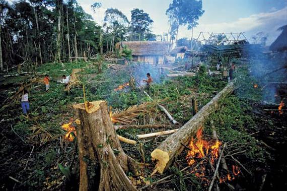 """Képtalálat a következőre: """"kivágott esőerdő"""""""