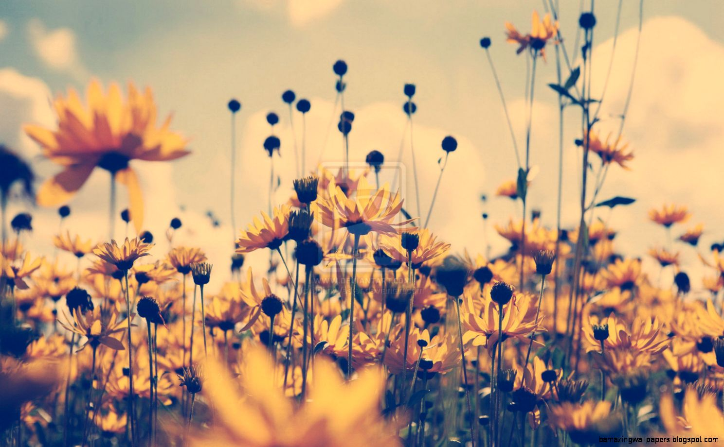 Yellow flower background tumblr amazing wallpapers view original size mightylinksfo