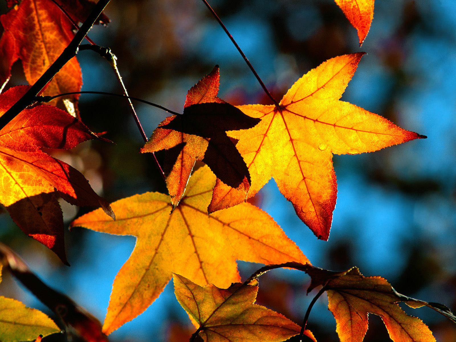 The best top autumn desktop wallpapers 8 En Güzel Sonbahar HD Duvar Kağıtları