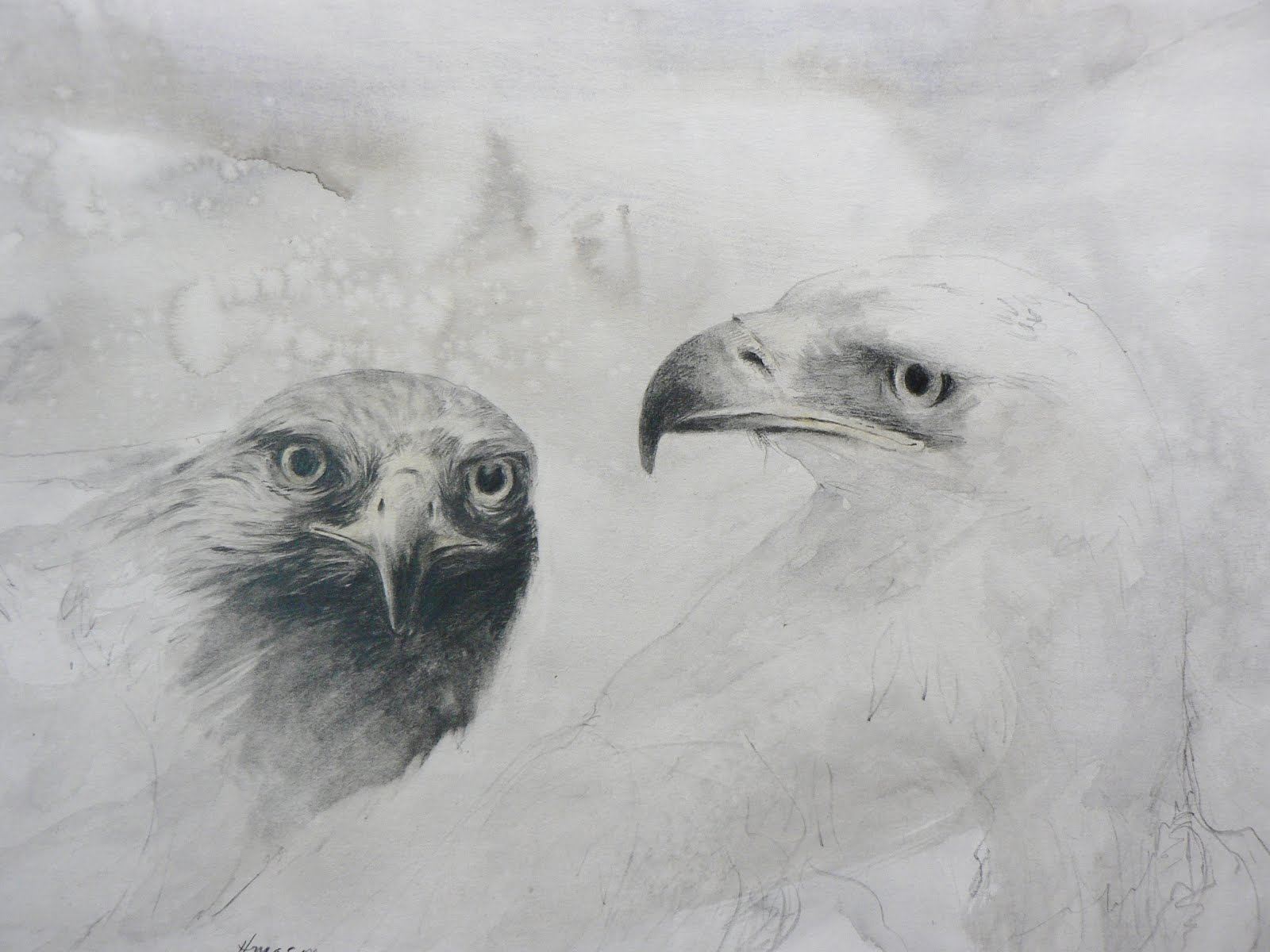 Two Eeagles