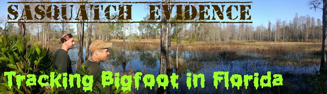 SASQUATCH EVIDENCE: Tracking Bigfoot in Florida