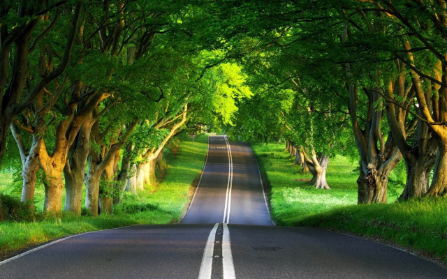 Tree Tunnel Wallpaper Samsung Galaxy Tablets Wallpapers