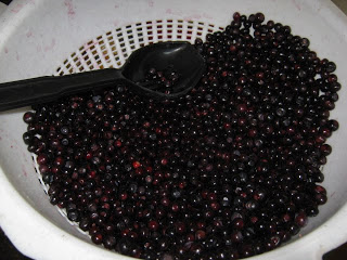 Dehdrating blueberries and huckleberries