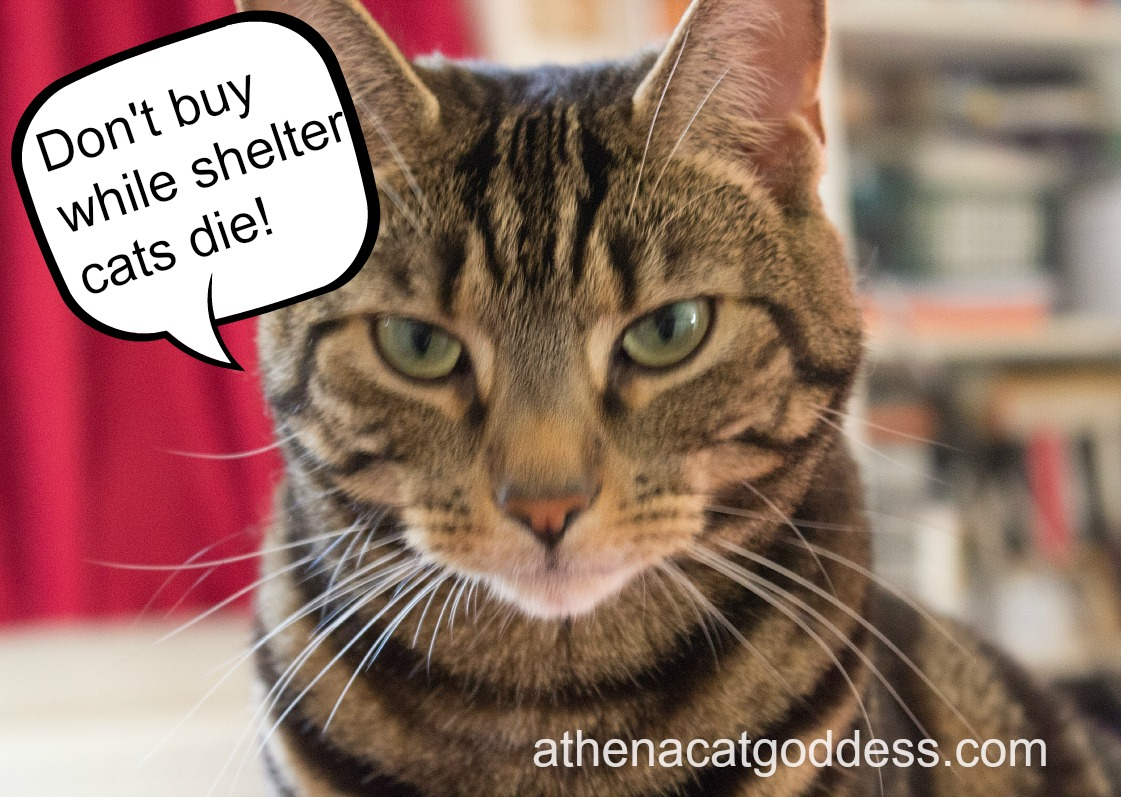 Don't Buy While Shelter Cats Die