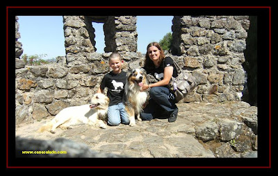 pastor australiano e golden retriever no Castelo de Montemor-O-Novo