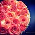 Tart táo Hoa hồng / Apple Tart Rose