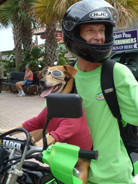 Andando de moto com o cachorro