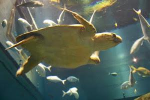 especie del oceano pacifico