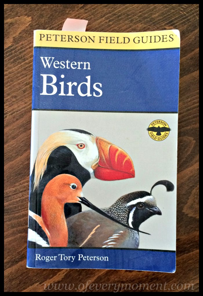 birds, bird book