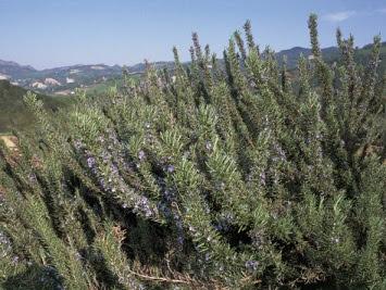 şifalı bitkilerde bulunana aktif maddeler