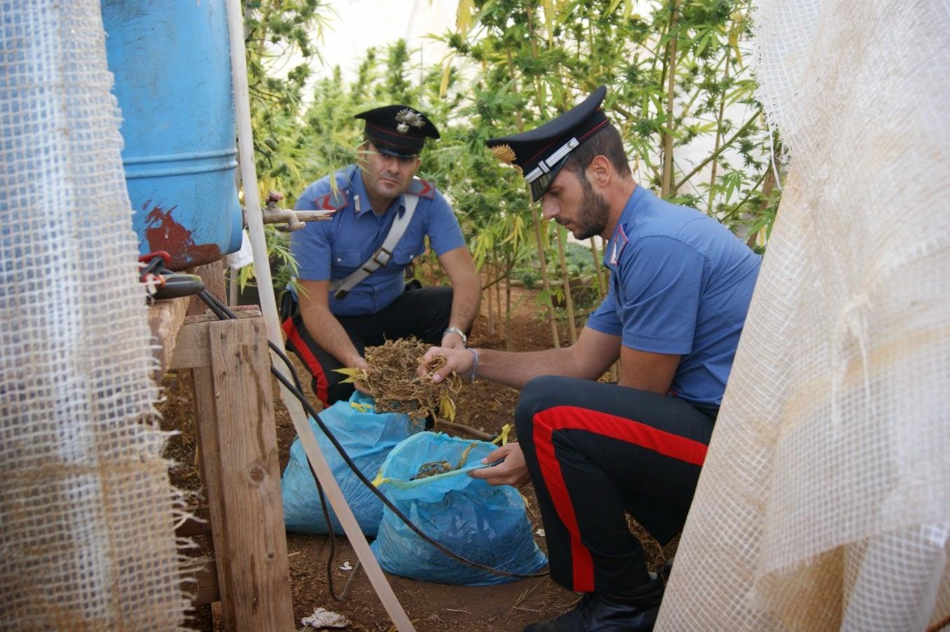 I Carabinieri di Pugliua in azione