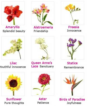 Flowers List Of Names With Pictures 7578577 Spojivachfo