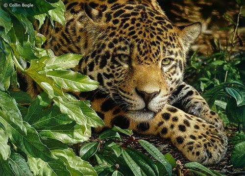 03-Jaguar-Collin-Bogle-Animal-Wildlife-in-Art-www-designstack-co