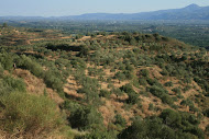The Eurotas Valley