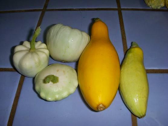 ∞ Gourds ∞