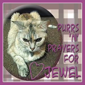 Jewel Needs Your Purrs Now