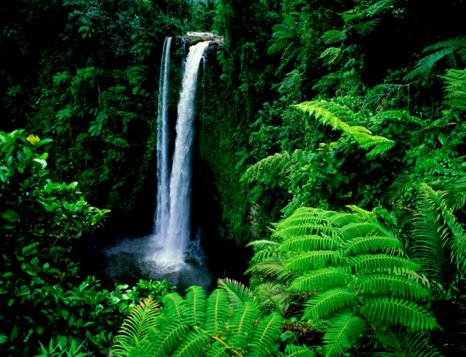 Feel the Rainfall of Leaves in Amazon Rain Forest   Found The World