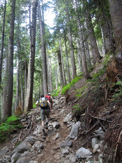 Roots and rocks on Howe Sound Crest Trail