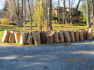 Many paper bags of yard trim at curb