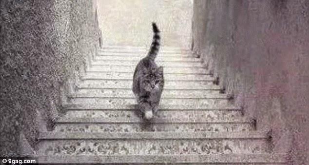 kucing ini naik atau turun dari tangga?