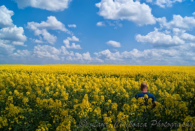 rapita rapeseed colza raps repce windows background desktop