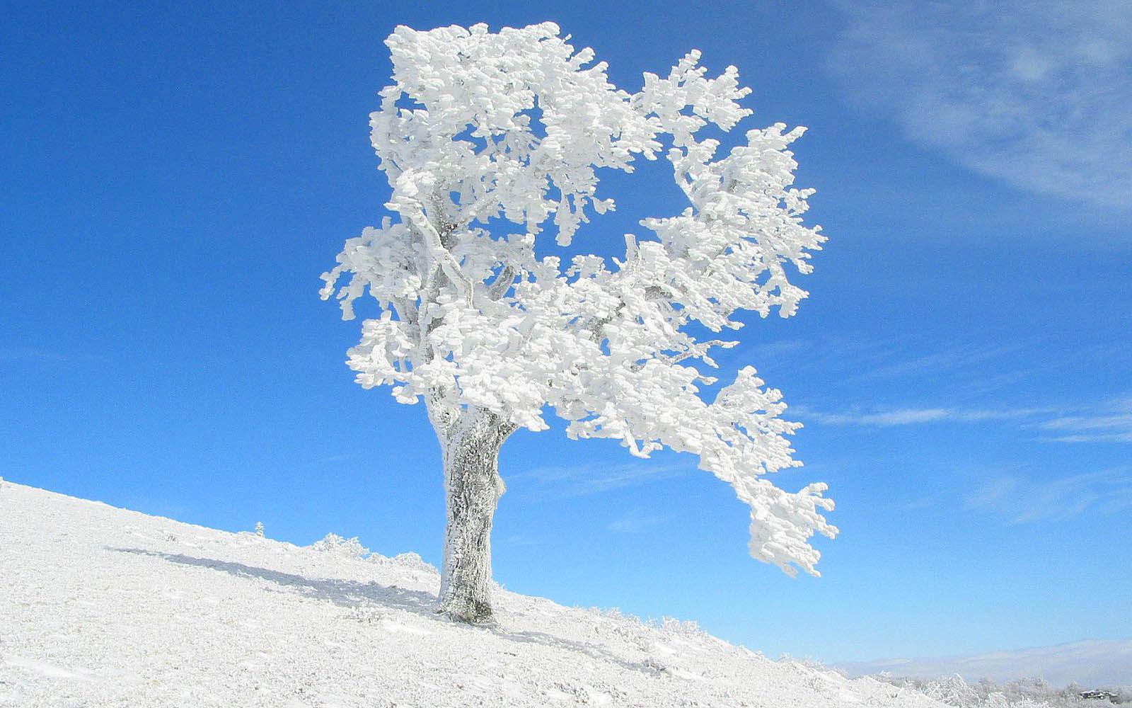 frozen trees widescreen wallpaper - photo #4