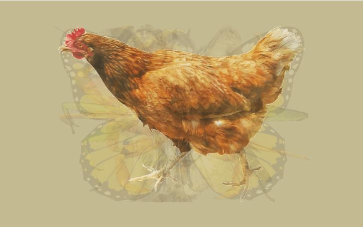 Картинки по запросу chicken hunter 2 icon