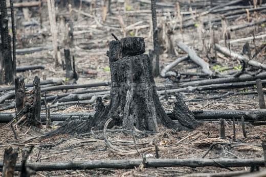 Greenpeace Sebut Wilmar Tersangkut Skandal Hutan