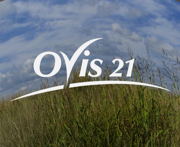 Ovis 21