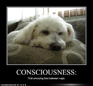 Consciousness E0560e96-0058-4d13-8184-8fd4196cc1ab1
