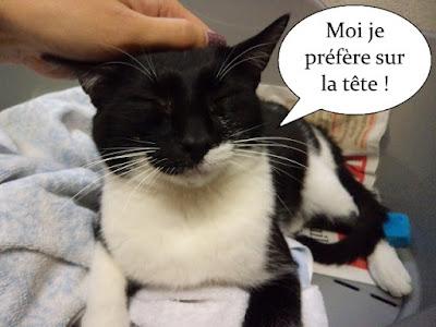 Grattouilles sur la tête d'un chat noir et blanc.