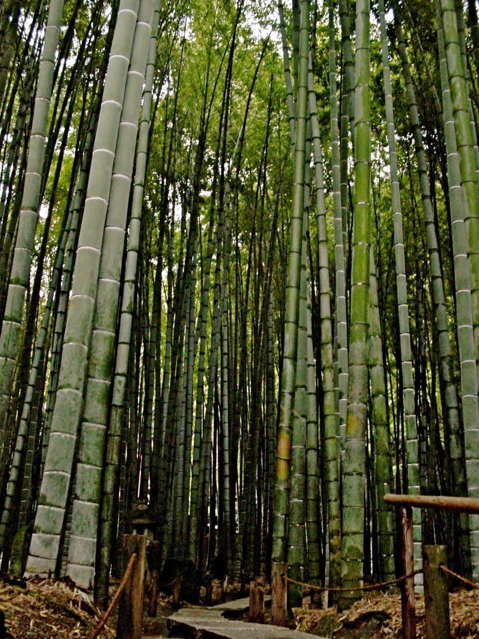 Hacia jap n 010 jardin japones historia for Jardin japones cursos