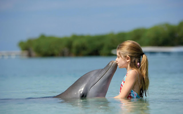 Cute and funny wallpaper with a dolphin kissing a little girl in the water