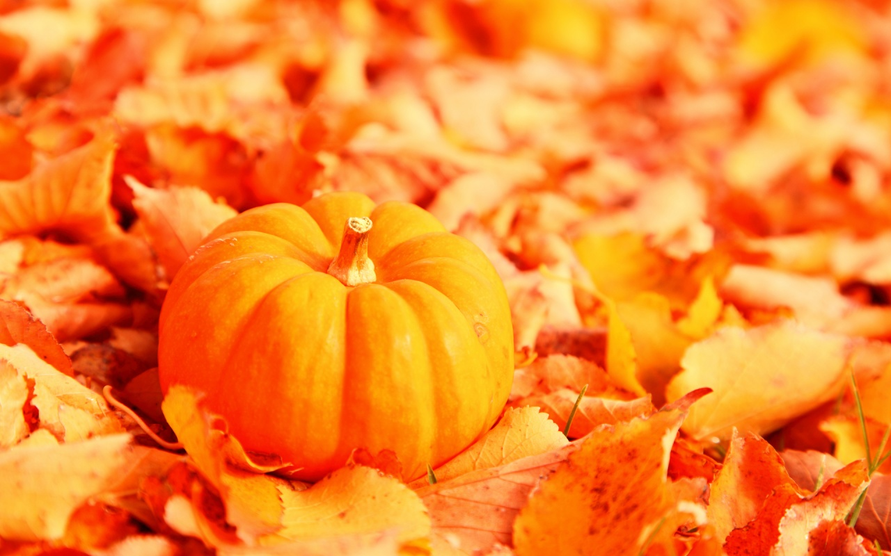 Little Pumpkin with Fallen Orange Autumn Leaves || Top Wallpapers Download .blogspot.com